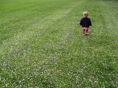 Blossomfield