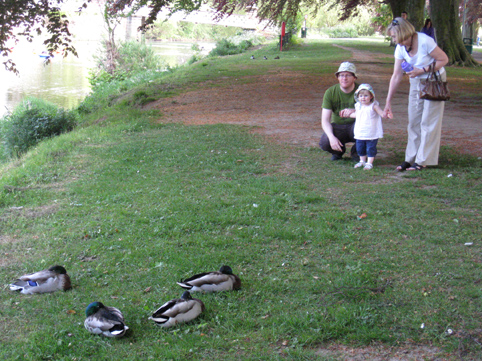 Four ducks, tom, olive and jill on the south bank of the river wye