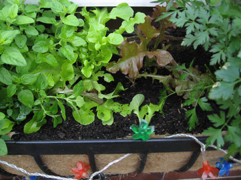 Oregano, lettuce, parsley, lights