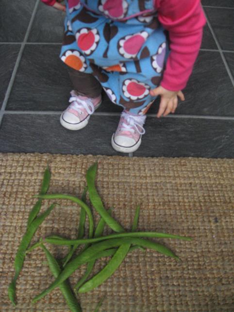 Beans harvest #4