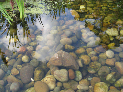 Pond study