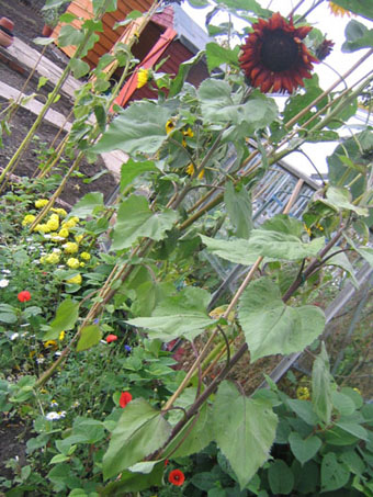 Allotment006_2